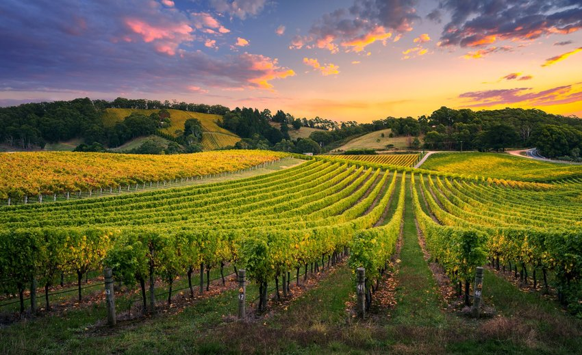 5 Countries that Produce the Most Wine