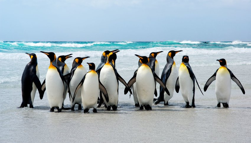 5 Best Places to See Wild Penguins Beyond Antarctica