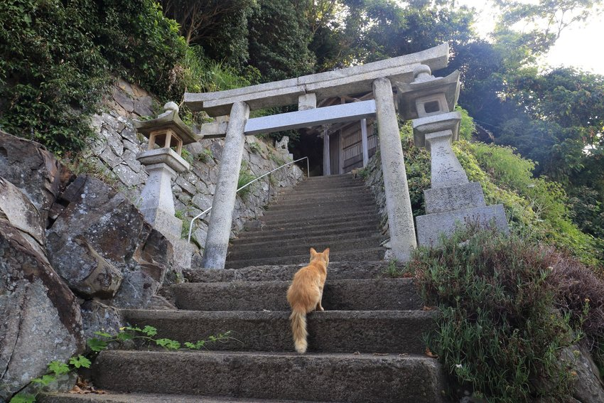 The Japanese Island Taken Over by Cats