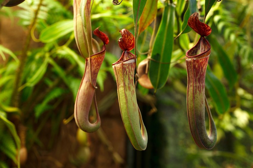 5 Plants That Exist in Only One Place
