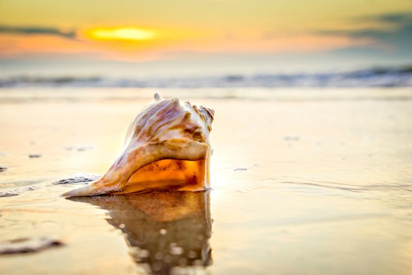 The Best U.S. Beaches for Collecting Seashells