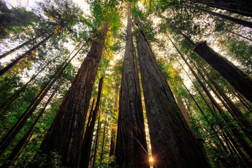 Where to See the Tallest Trees in the World