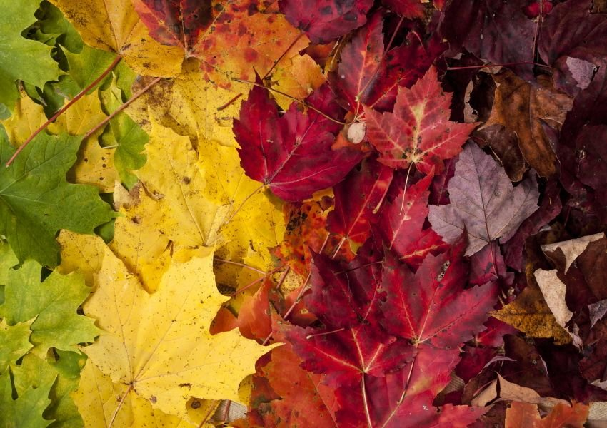 Leaves of various colors