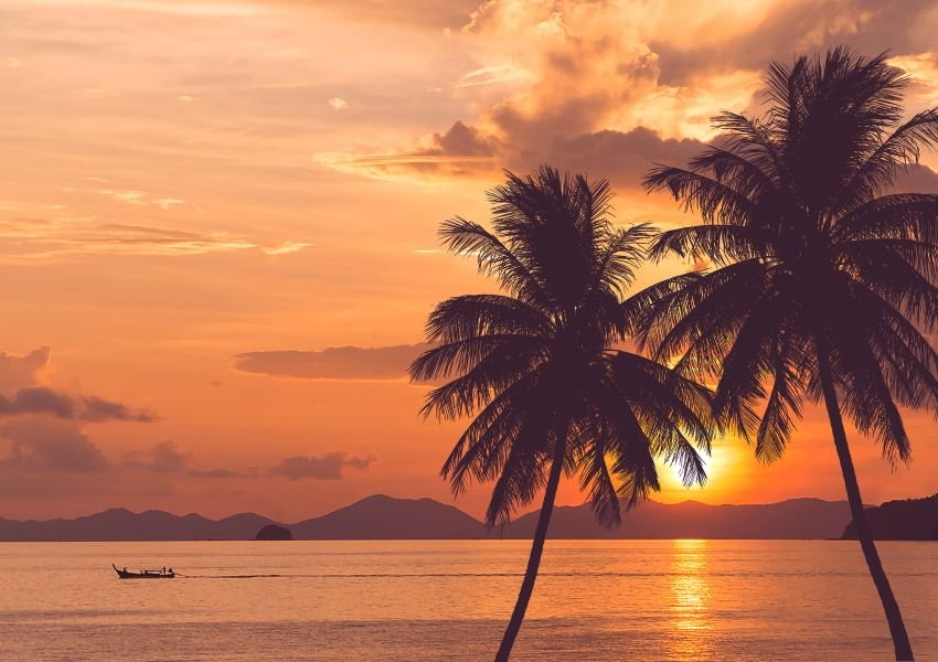 Photo of a beautiful orange sunset behind two palm trees