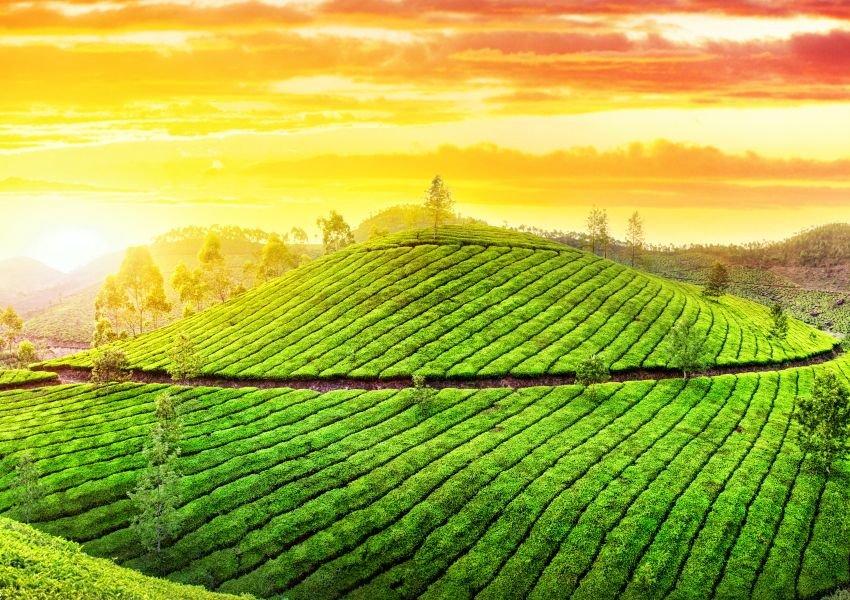Photo of a beautiful orange sunset above a vibrant green hillside