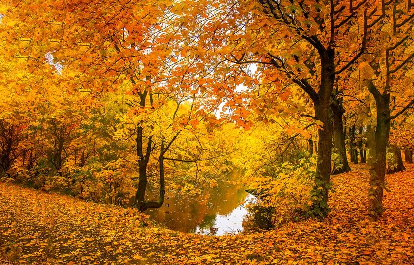 6 seasonal phrases for fall