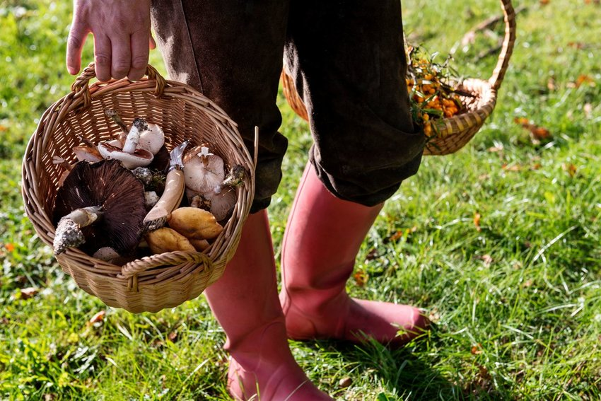 What Is Mushroom Hunting and Where Can You Do It?