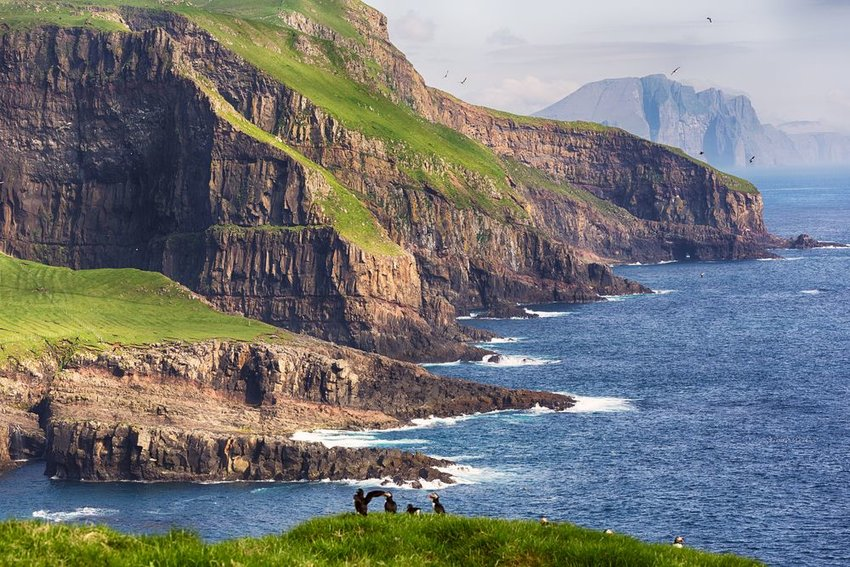 Detailed landscape of Faroe Island cliffs with natural wildlife in foreground