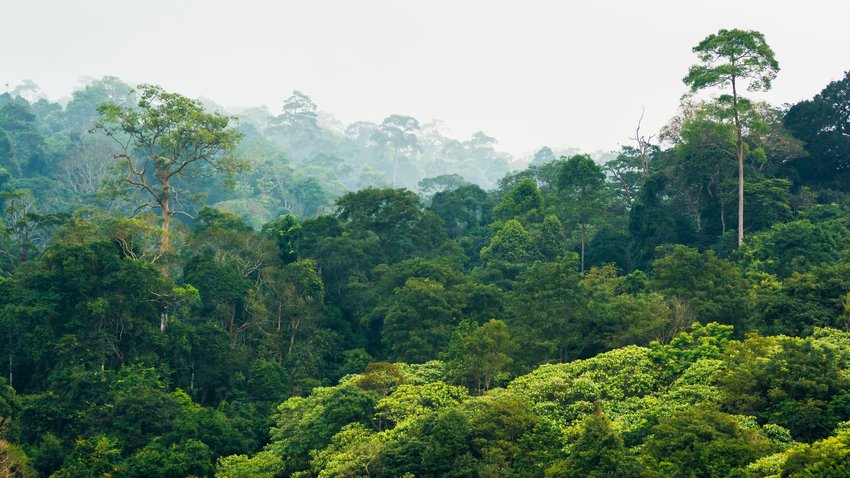 Aerial view of tropical rainforest in the Khao Yai National Park, Thailand