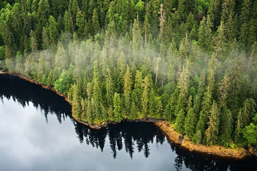 Aerial view of temperate rainforest near a lake at the Misty Fjords National Monument, Alaska