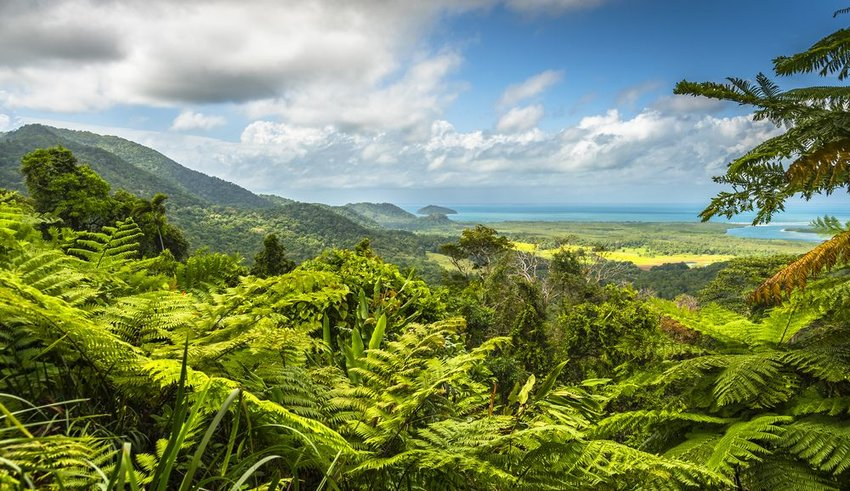 Aerial view of green canopy in the Daintree Rainforest on a cloudy afternoon, Australia