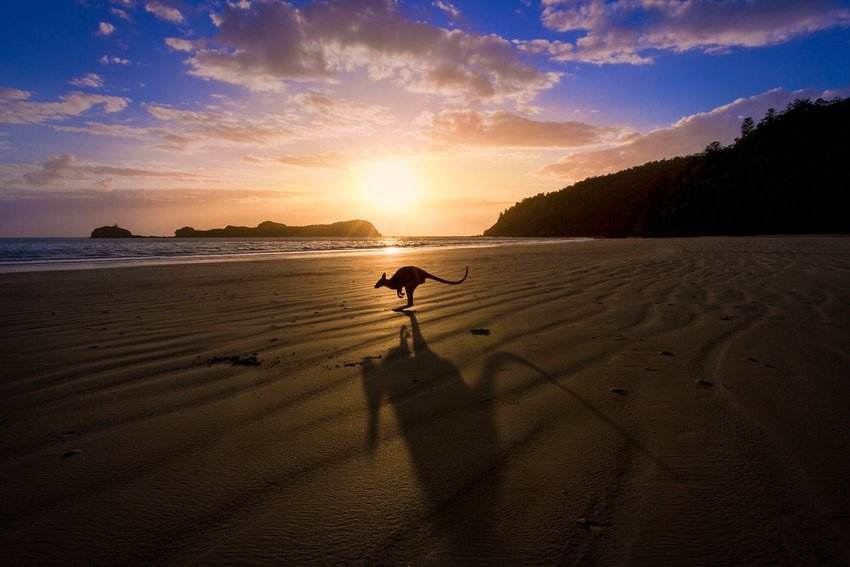Photo of a kangaroo on the beach at sunset