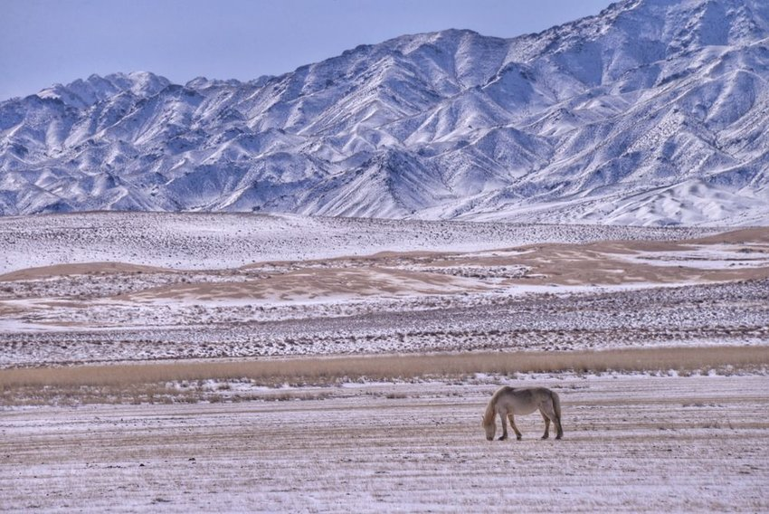 Photo of a horse in a snowy desert