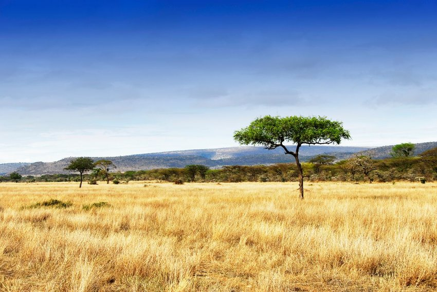 Photo of a grassy landscape with a few trees