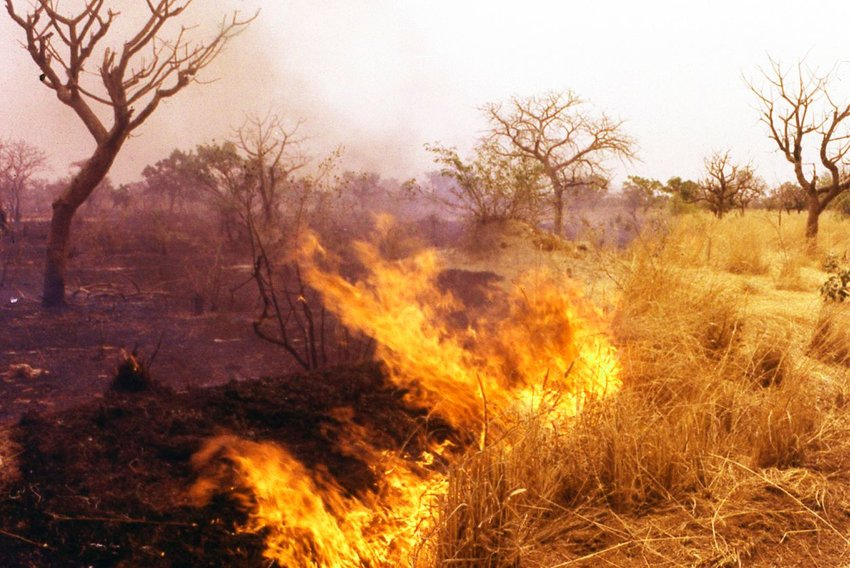 Photo of a burning grassland