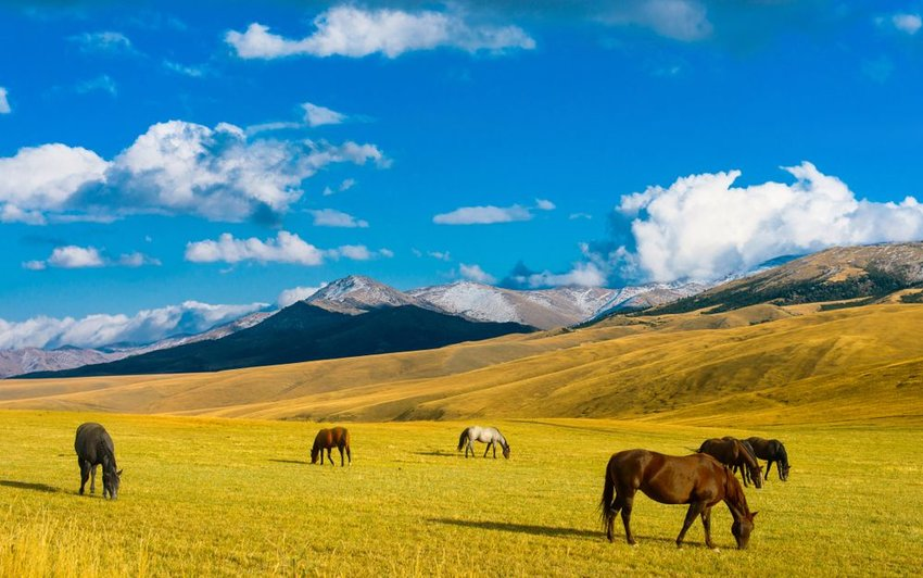 Grazing horses standing in an open steppe under clear blue skies