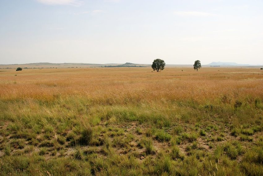 Landscape of grassy, empty steppe with few trees in South Africa