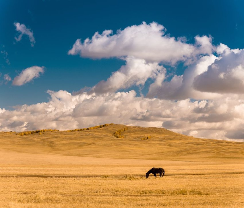 Open landscape on the Kazakh steppe, horse standing in pasture