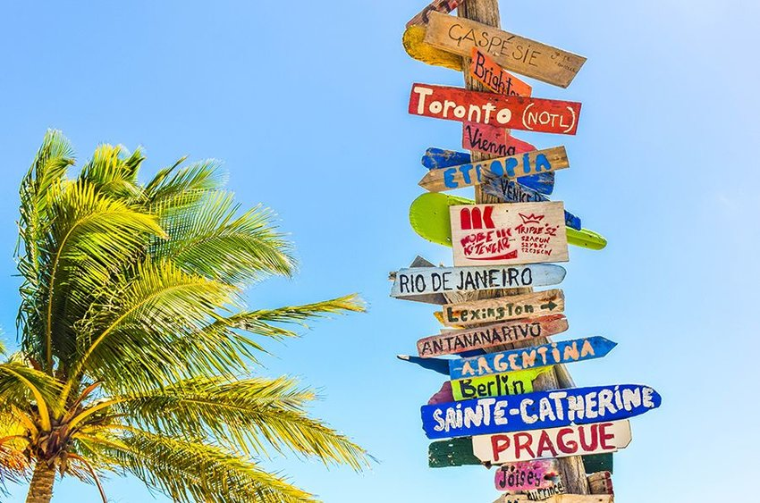 Photo of signs pointing in all different directions next to a palm tree