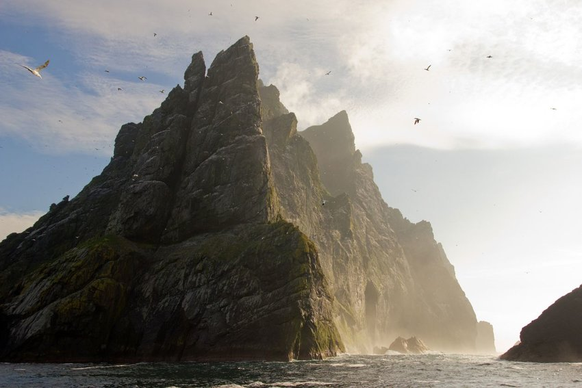 Northern gannets seen on top of the remote and steep cliffs of St Kilda