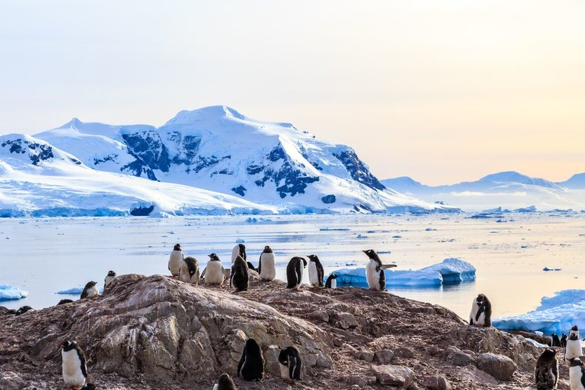Group of wild penguins standing on rock in icy Antarctic landscape