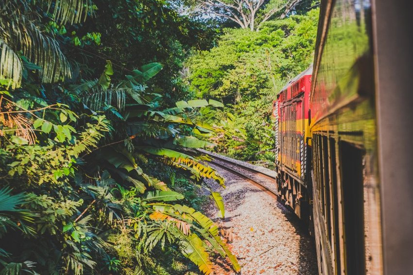 View from train going through jungle in Panama
