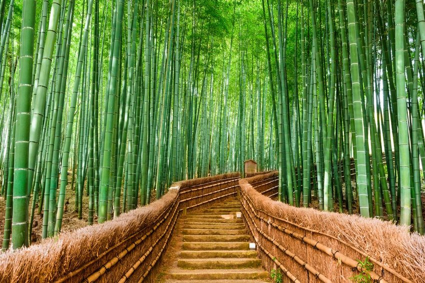 Stairs through Sagano Bamboo Forest