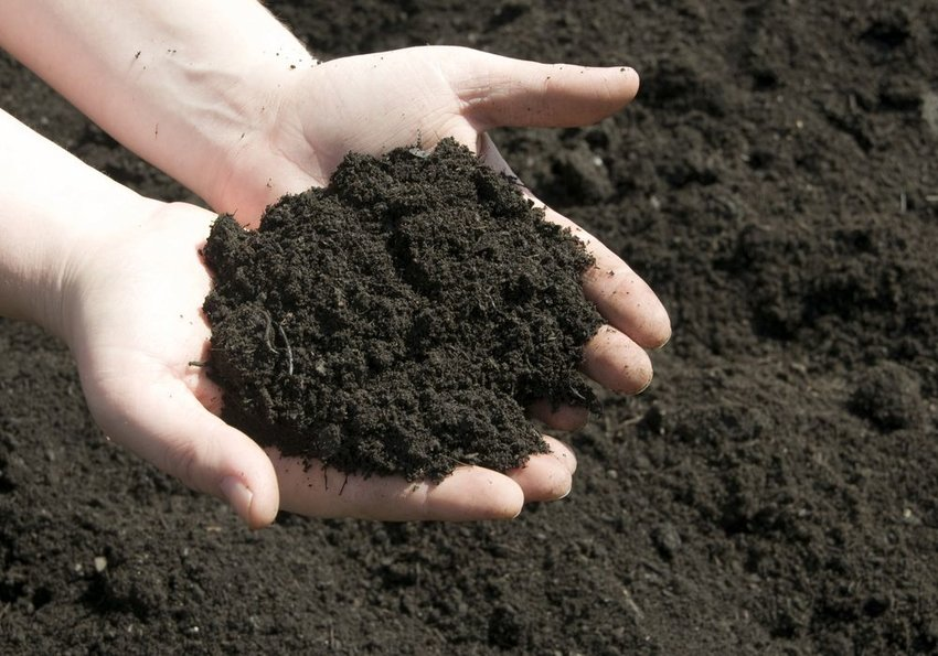 Up close view of person's hands holding a pile of brown dirt
