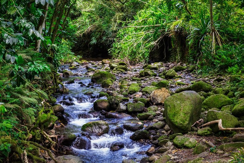 Interior view of bubbling creek and rocky forest in Hawaii, USA