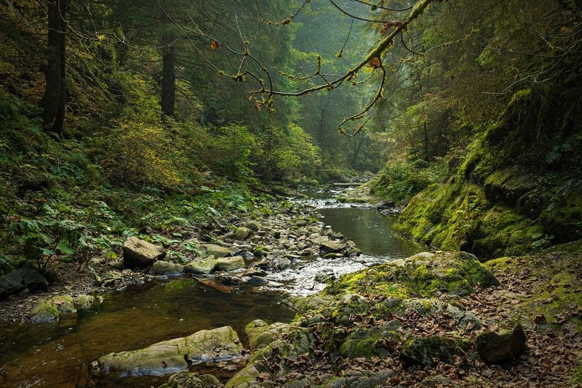 Black Forest along the Roetenbach in Autumn, Germany