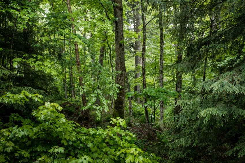 What (and Where) Is a Deciduous Forest?