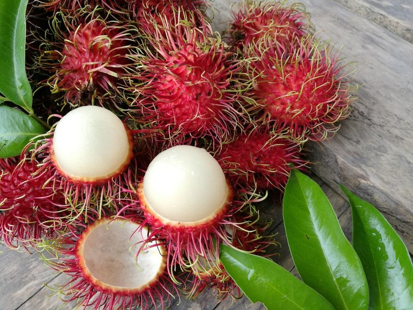 Up close view of open rambutan fruits showing white interior and spiny red shell