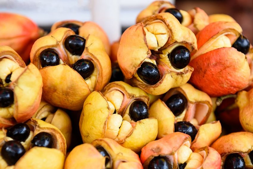 Bunch of ackee fruits stacked in a pile, showing seeds and thick skin