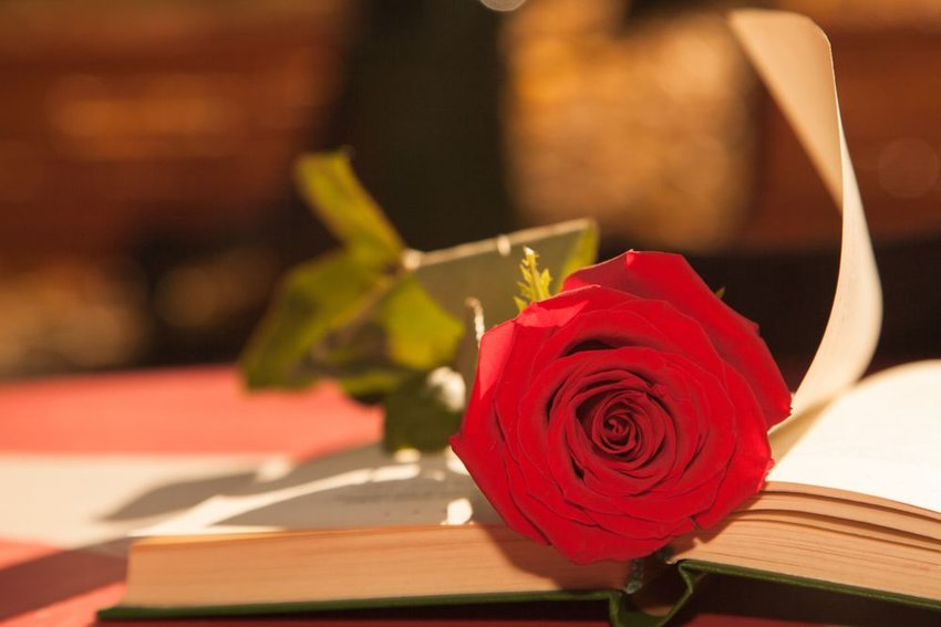 A rose laying on an opened book