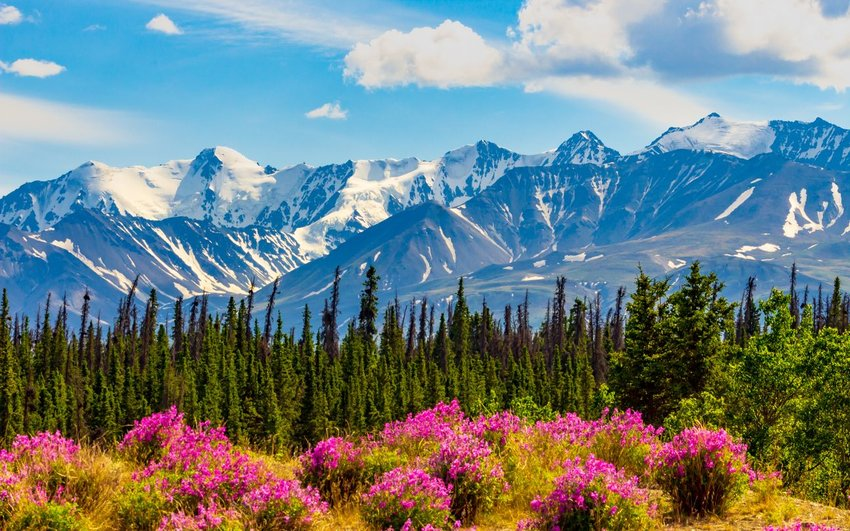 Scenic snowcapped mountains and green fields of flowers in the Yukon territory, Canada