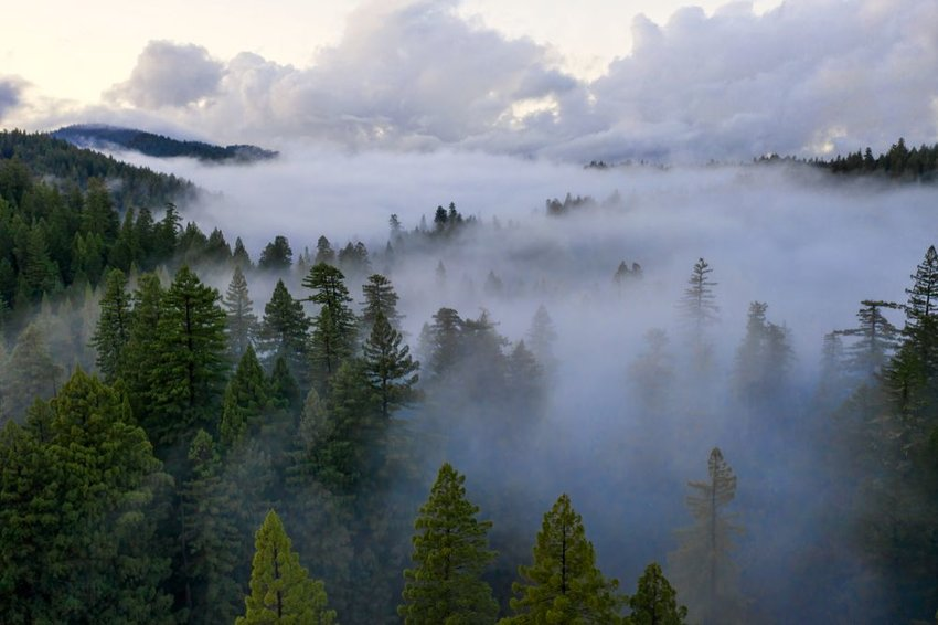 Aerial view of Northern California wilderness, showing heavy fog obscuring forest landscape