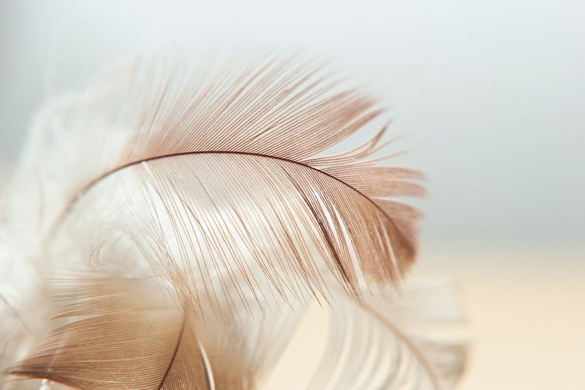 Close up of brown and white feathers