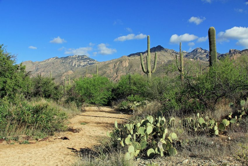 Hiking trail in Arizona with mountains in the background surrounded by cactus