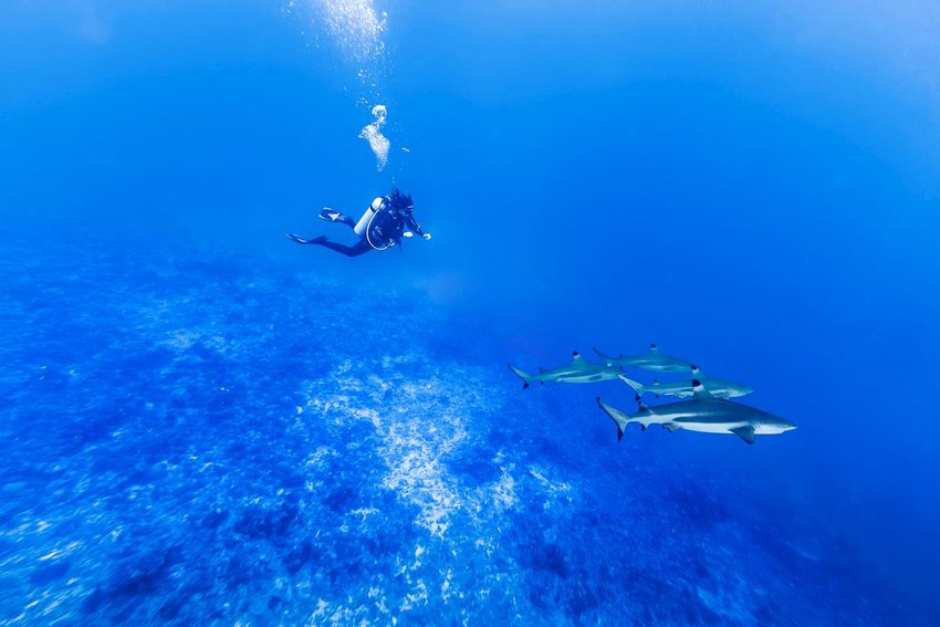 Person diving with sharks
