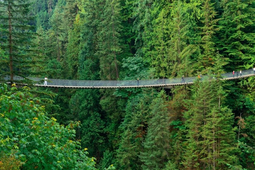 Overview of Capilano Suspension Bridge stretching across the forest.