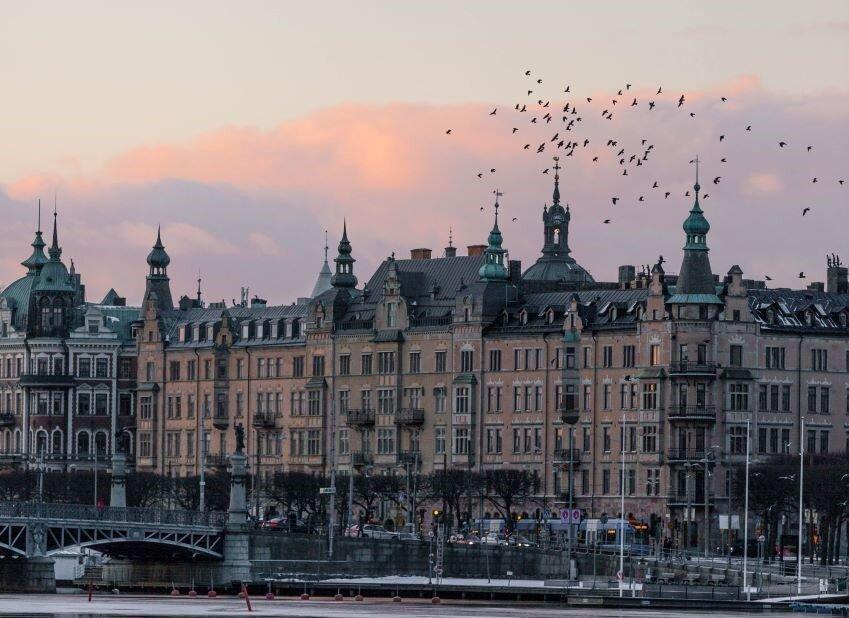 Birds over Stockholm, Sweden.
