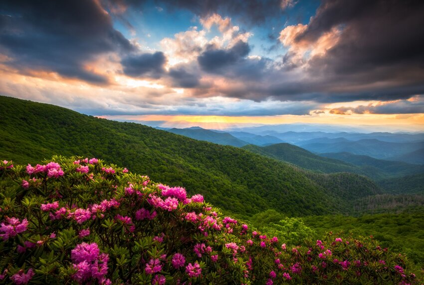 Colorful blooms frame rolling green hills under dramatic cloudy skies at Craggy Gardens
