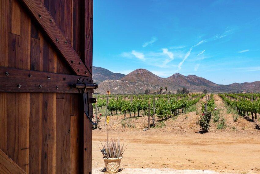 Door Opening to Vineyard in Baja California.