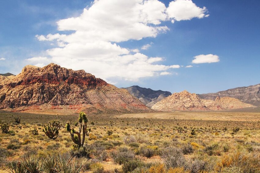 Panorama with joshua tree at red rock canyon in Nevada.