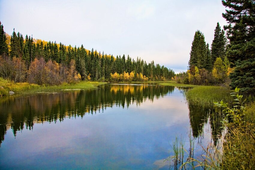 Northern river and reflections in boreal forest.